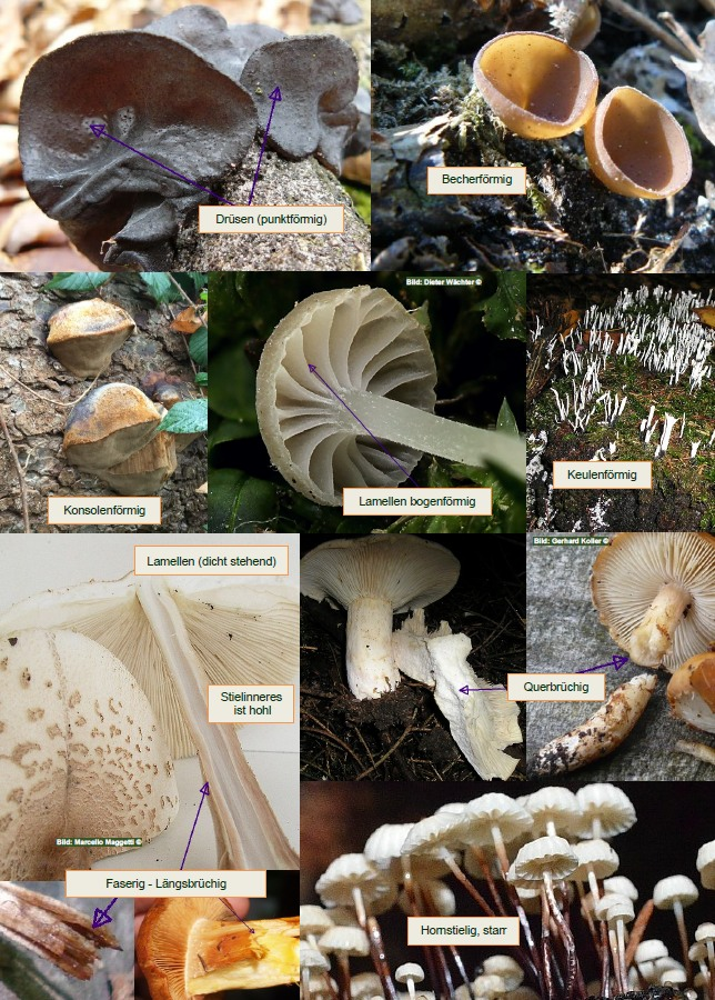 3600 Pilze - Pilzlexikon