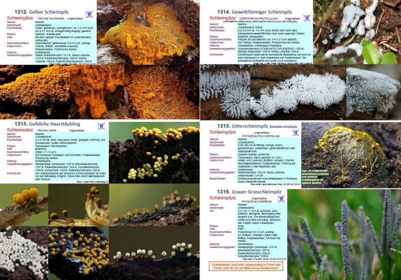 1700 Pilze Buch - Auflage 21