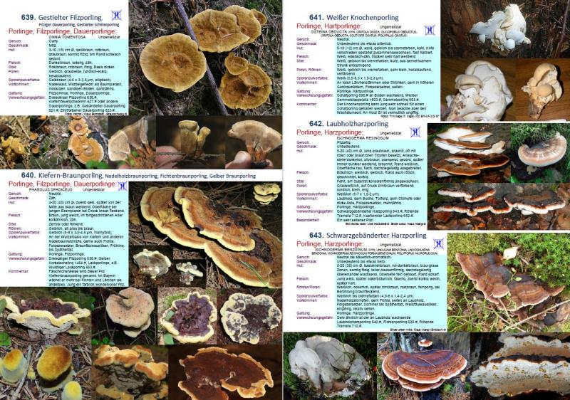 1700 Pilze Buch - Auflage 22
