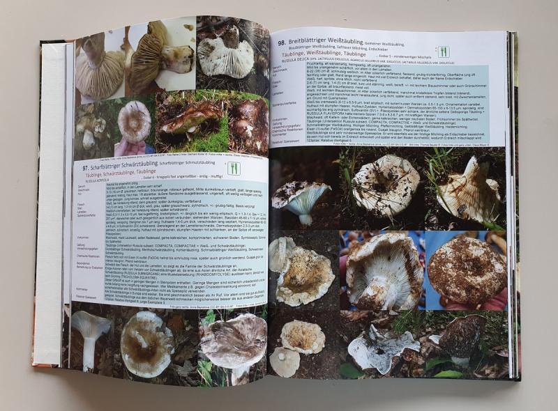 Fachbuchserie Band 11: Sprödblättler